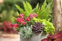 Containers, window boxes and hanging baskets / by shop bluegrass