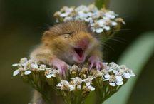 Garden humour / by shop bluegrass