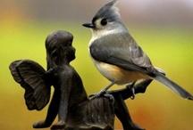 Birds / by shop bluegrass