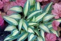 Perennials / by shop bluegrass