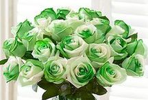 Green / Green symbolizes nature, tranquility, good luck and health. Green flowers and plants from 1800flowers.com is the perfect way to wish friends and family a healthy and prosperous life!