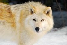 BC Wildlife / Come meet some of BC's residents! Discover more at  http://bit.ly/10x6WSx