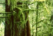 BC Forests + Trees / BC's giants of the forest are big, beautiful and awe-inspiring.