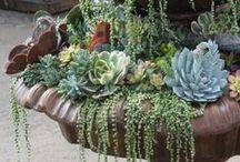 Succulents / by shop bluegrass