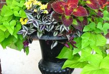 Containers for shade / by shop bluegrass