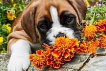 Pets in the garden! / by shop bluegrass