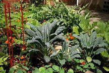 Edible gardens / by shop bluegrass