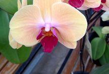 Orchids / by shop bluegrass