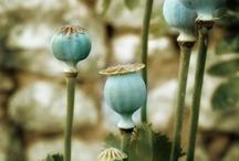 Flower Arrangements / by Christy Kinard