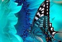 Favorite Colors / by Sondra Seely