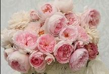 Flowers / by Jasmine Gedoyan