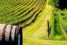 italy wine country / wineries, vineyards and tips for visiting the wine regions of Italy