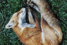 Animal Farm / Pets, not food.