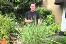 Tropical Paradise Garden TV / Explore living in tropical South Florida with garden host Robert Bornstein / by Robert Bornstein