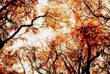 Autumn / by Rachel Malstrom