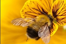 Bees / The amazing life of bees in nature