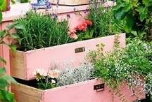 Garden & Outdoor spaces