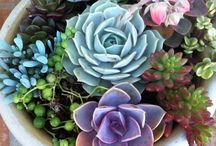 :: put a succulent on it :: / i really love succulents / by Jenn Elle