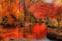 Autumn or Fall - I just love it! / Whether you call it Autumn or Fall it is my favourite time of year