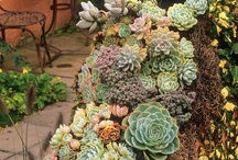 Great ideas for plants and gardens / Great ideas for plants and gardens and landscaping / by Wyee Nursery