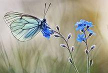 Butterflies / What a wonderful world.....