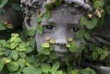 garden / by Jill Hopwood