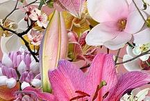 Flowers / by Maggie Motyka