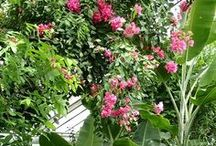 """THE BOTANICAL GARDEN OF THE COMENIUS UNIVERSITY, BRATISLAVA, SLOVAKIA / Patronage over the Competition """"FLOWER LOVERS - GROW, ENJOY IT, SHARE AND WIN!"""""""