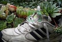Sempervivum In Adidas Shoes / Shoes are IN even when they´re already destroyed