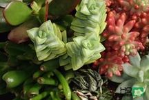 Mixture / Mixture of plants and their colors in arrangements