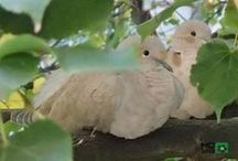TURTLE - DOVES / Watching from my room :)