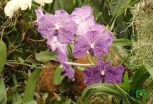 ORCHIDS IN KLOSTERNEUBURG / Súťaž: http://www.hoya.sk/rady-a-tipy/1433-competition-qflower-lovers-grow-enjoy-it-share-and-winq Výstava orchideí v Klosterneuburgu: http://www.hoya.sk/rady-a-tipy/1416-vystava-orchidei-v-klosterneuburgu