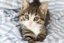 Just Plain Adorable (but mostly cats) / by Ellie Thodal