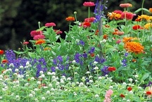 Gardening: dreaming beyond my not-so-green thumb