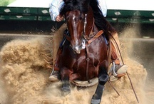 My Horse Obsession / by Nicole Osborn