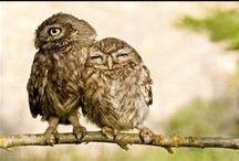owls / by Nora Juusela