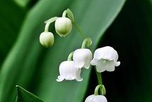 Kwiatuszkii :)