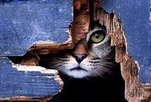 All About Cats / by Karen Bott