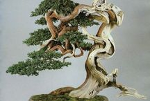 Bonsai / Bonsai, fairy gardens and miniature garden designs.
