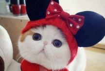 All About Cats 2 / Wonderful cats! / by Karen Bott