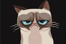 Grumpy Cat / Grumpy Cat memes