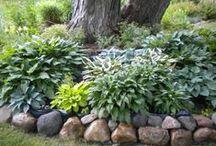 Gardening: shade-porch/trees