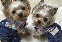 Puppies / Μικρα χαριτωμενα κουταβακια απο ολο τον κοσμο