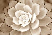 Flowers / I love flowers :) / by Ashlyn G.