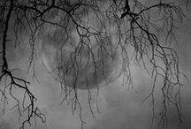 boo! / by Laurie Kofnetka