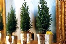 Christmas ~ Greenery