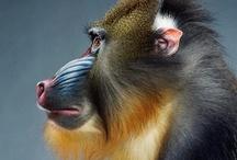 Fauna / - animal kingdom -