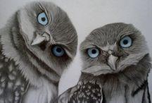 Owls / by Nikki Evans