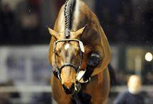 Horses / Love horses / by Ashlyn G.