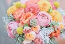 Throw the Bouquet / by Ashley Lynn